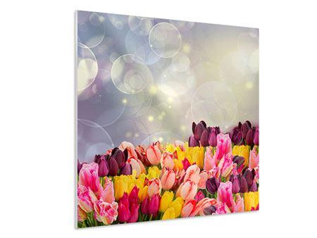 Hartschaumbild Buntes Tulpenbeet im Lichtspiel