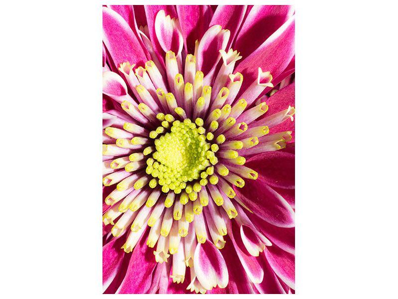 Hartschaumbild Majestätische Lotus