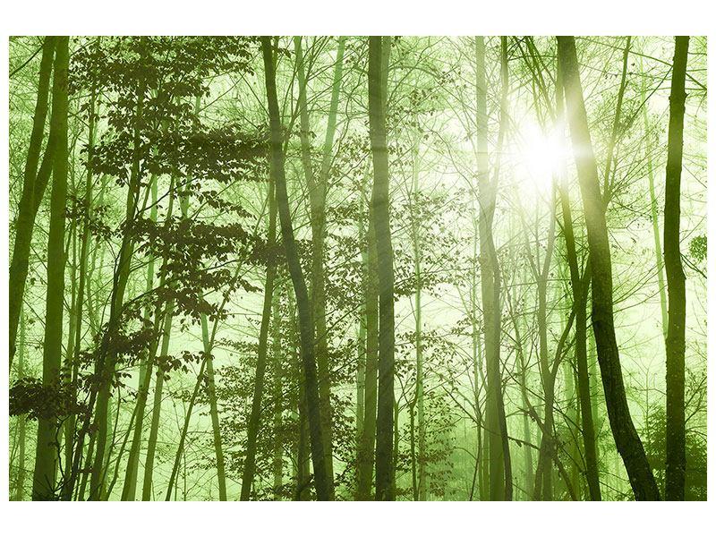 Hartschaumbild Nibelungenwald