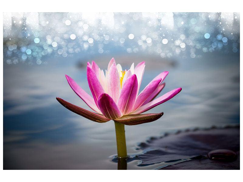 Hartschaumbild Lotus im Morgentau