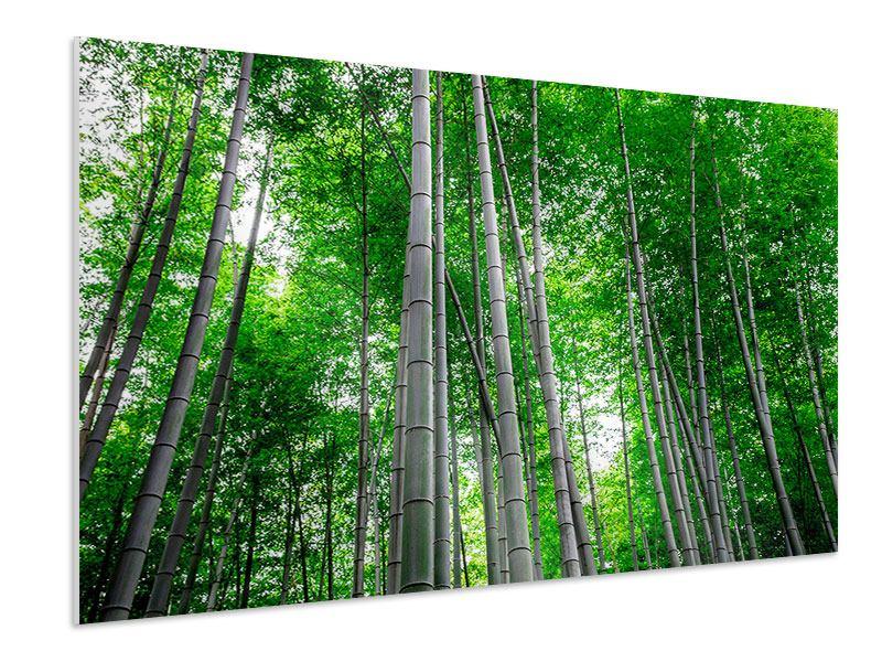 Hartschaumbild Bambuswald