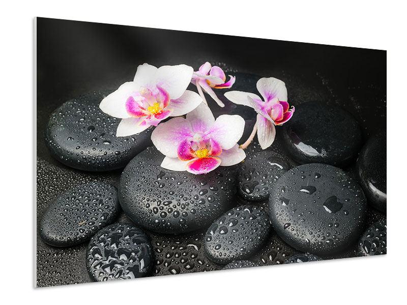 Hartschaumbild Feng-Shui-Orchidee Zen