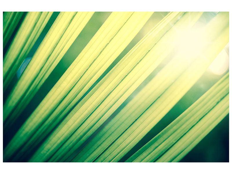 Hartschaumbild Beleuchtetes Palmblatt