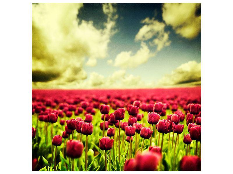 Hartschaumbild Ein Tulpenfeld