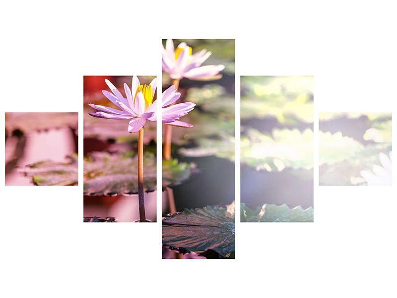 Hartschaumbild 5-teilig Seerosen im Teich