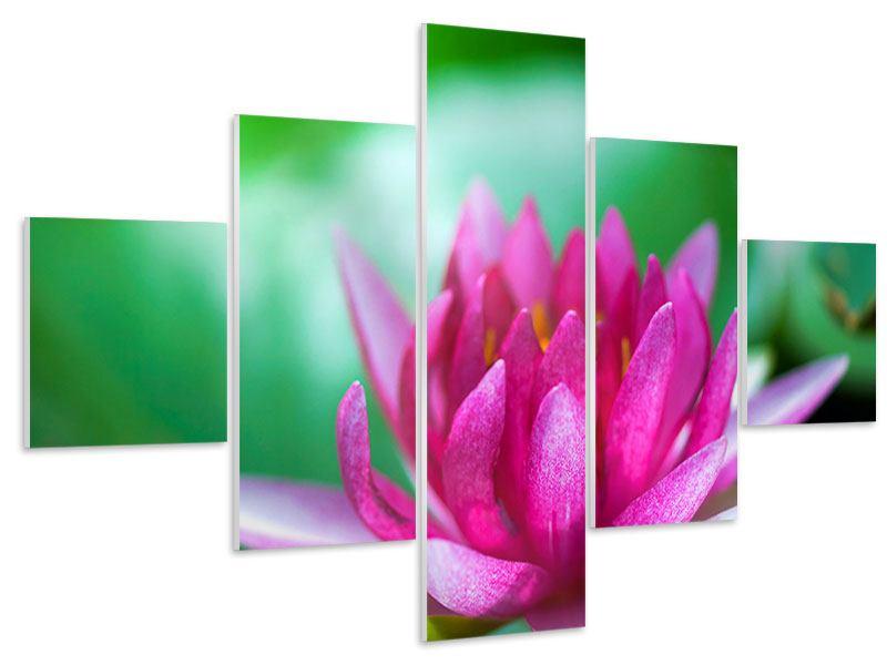 Hartschaumbild 5-teilig Lotus in Pink