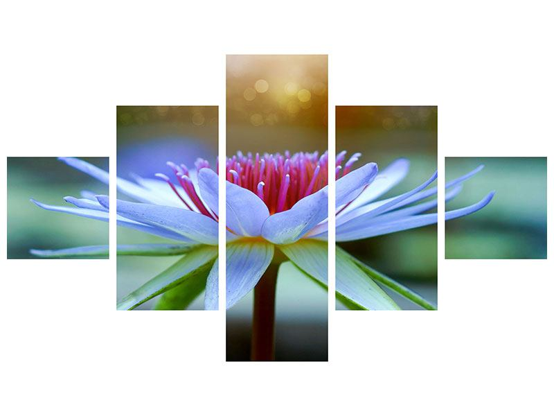 Hartschaumbild 5-teilig Pretty Lotus