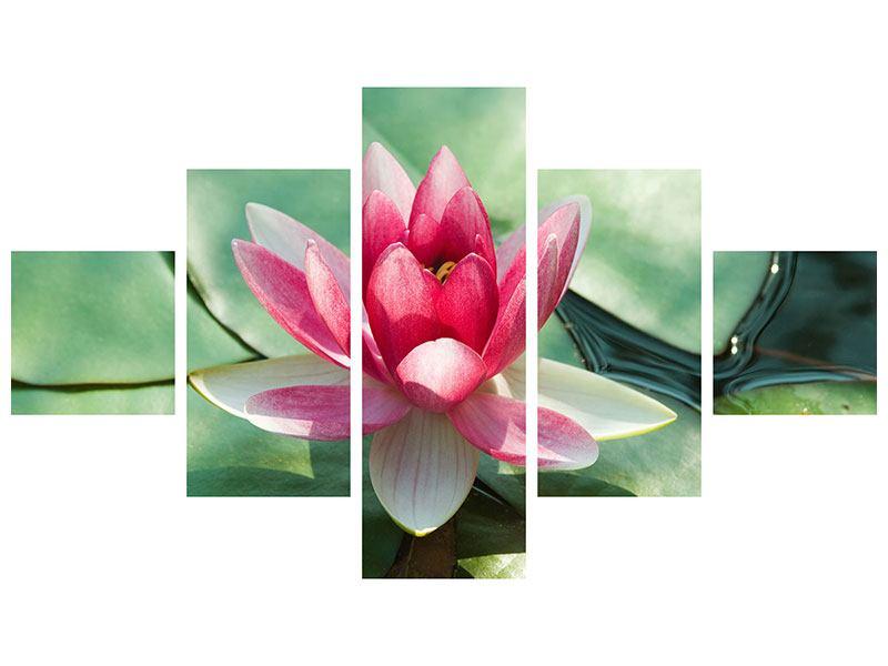 Hartschaumbild 5-teilig Der Frosch und das Lotusblatt
