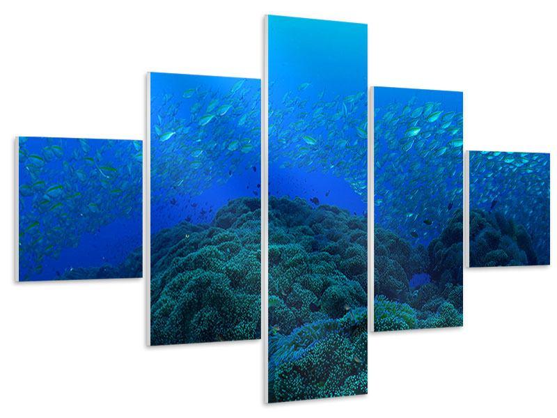 Hartschaumbild 5-teilig Fischschwärme