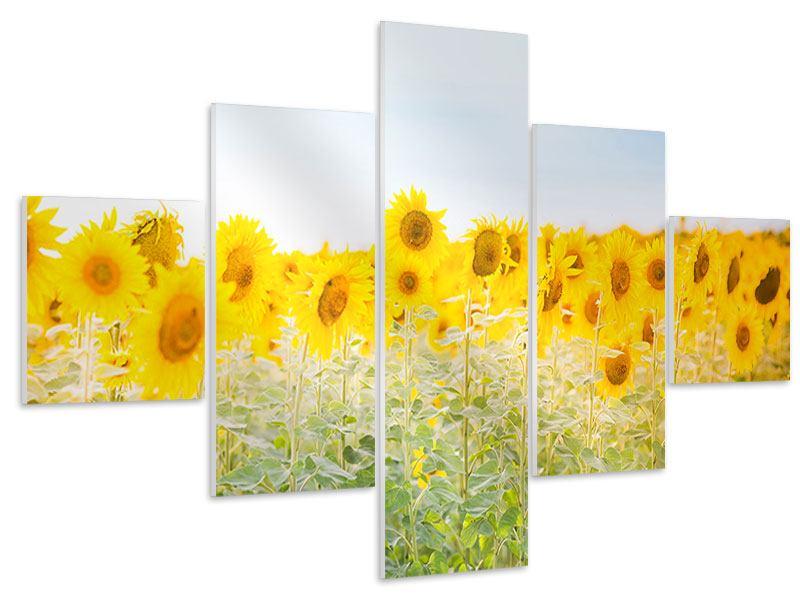 Hartschaumbild 5-teilig Im Sonnenblumenfeld