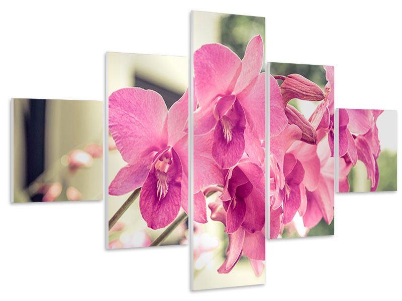 Hartschaumbild 5-teilig Ein Fensterplatz für die Orchideen