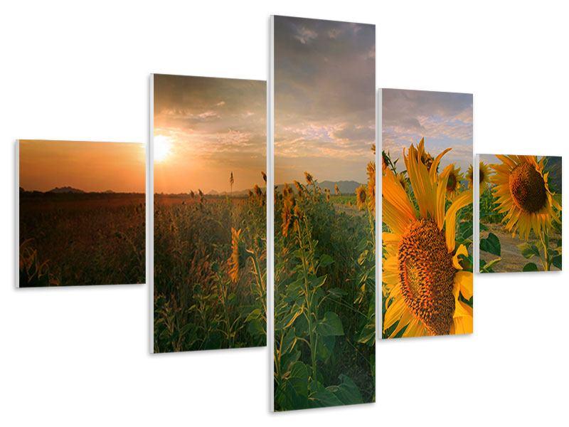Hartschaumbild 5-teilig Sonnenblumen im Lichtspiel