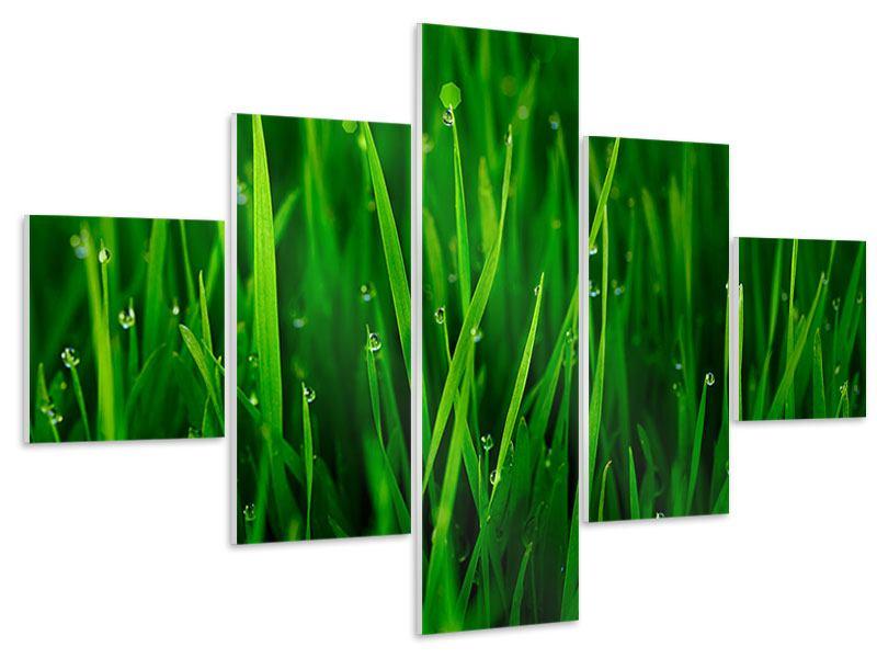 Hartschaumbild 5-teilig Gras mit Morgentau