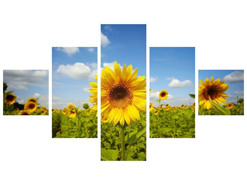 Hartschaumbild 5-teilig Sommer-Sonnenblumen