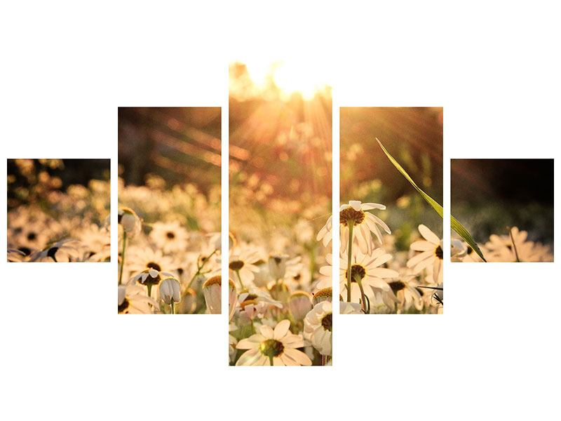 Hartschaumbild 5-teilig Gänseblümchen bei Sonnenuntergang