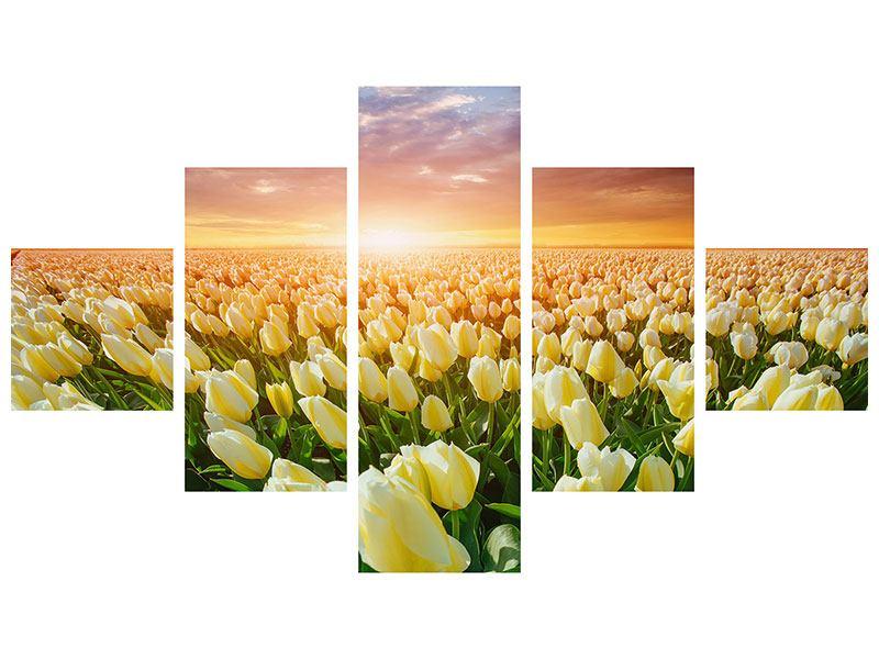 Hartschaumbild 5-teilig Sonnenaufgang bei den Tulpen