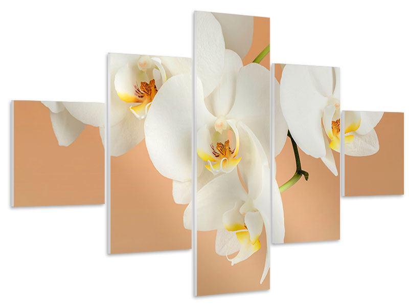 Hartschaumbild 5-teilig Weisse Orchideenblüten