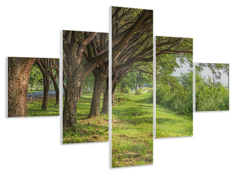 Hartschaumbild 5-teilig Alter Baumbestand