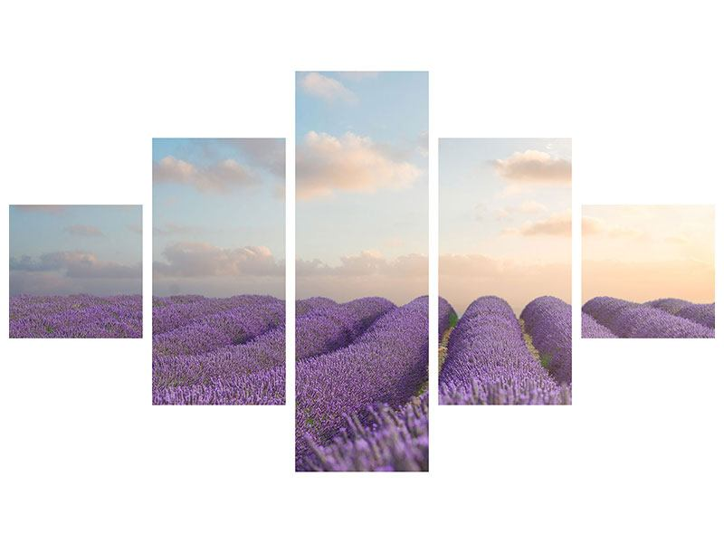 Hartschaumbild 5-teilig Das blühende Lavendelfeld
