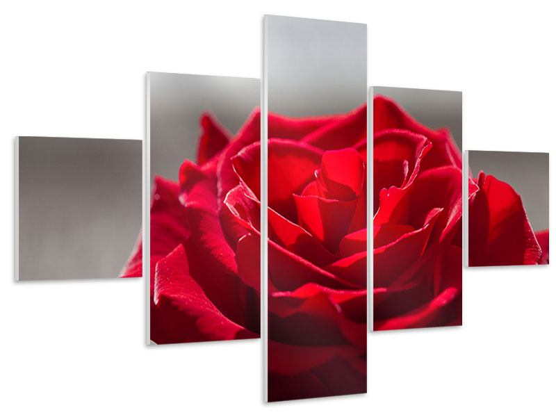 Hartschaumbild 5-teilig Rote Rosenblüte