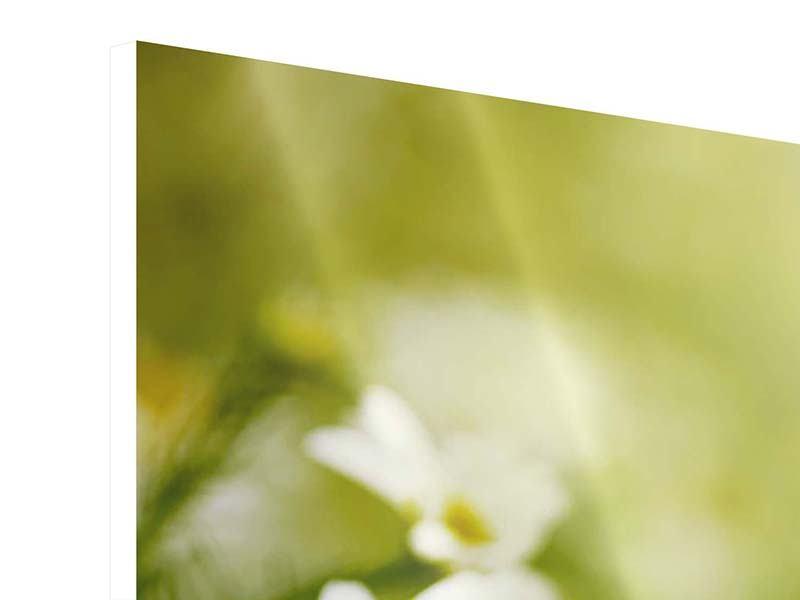 Hartschaumbild 5-teilig Die Gänseblümchen