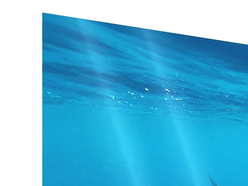 Hartschaumbild 5-teilig Der Walhai