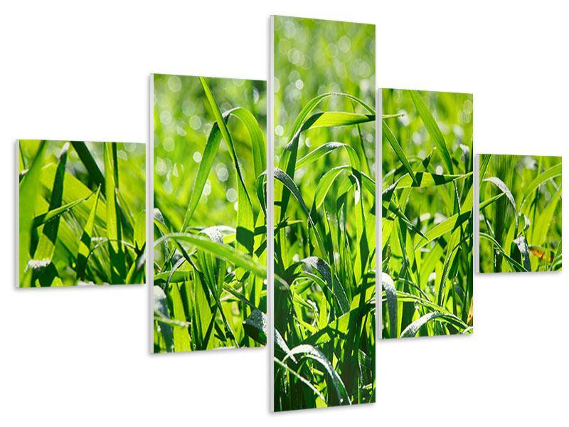 Hartschaumbild 5-teilig Sonniges Gras