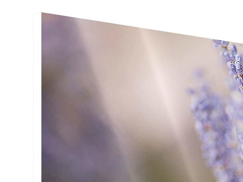 Hartschaumbild 5-teilig Lavendel XXL
