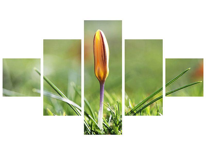 Hartschaumbild 5-teilig Die Blütenknospe