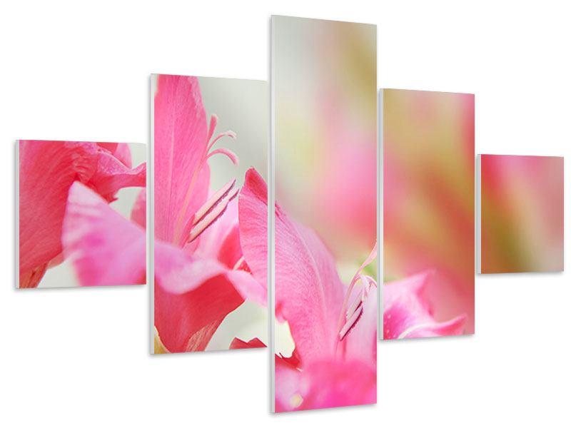 Hartschaumbild 5-teilig Gladiolen