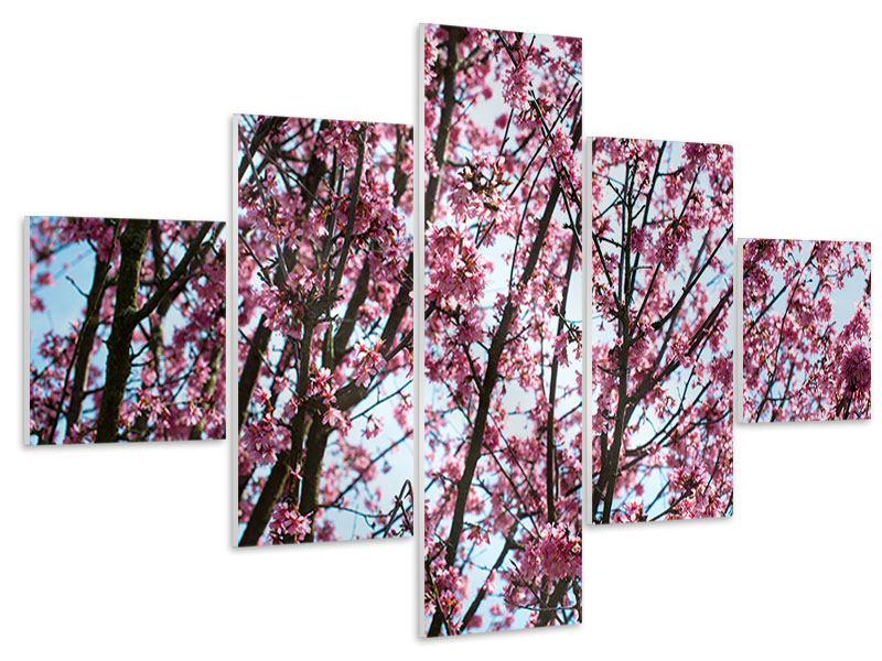 Hartschaumbild 5-teilig Japanische Blütenkirsche
