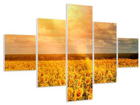 Hartschaumbild 5-teilig Goldenes Licht für Sonnenblumen