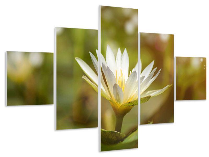 Hartschaumbild 5-teilig Lilien-Lichtspiel
