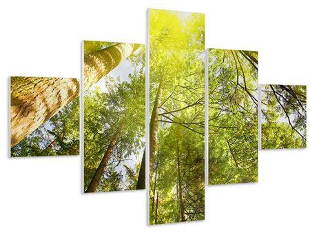 Hartschaumbild 5-teilig Baumkronen in der Sonne