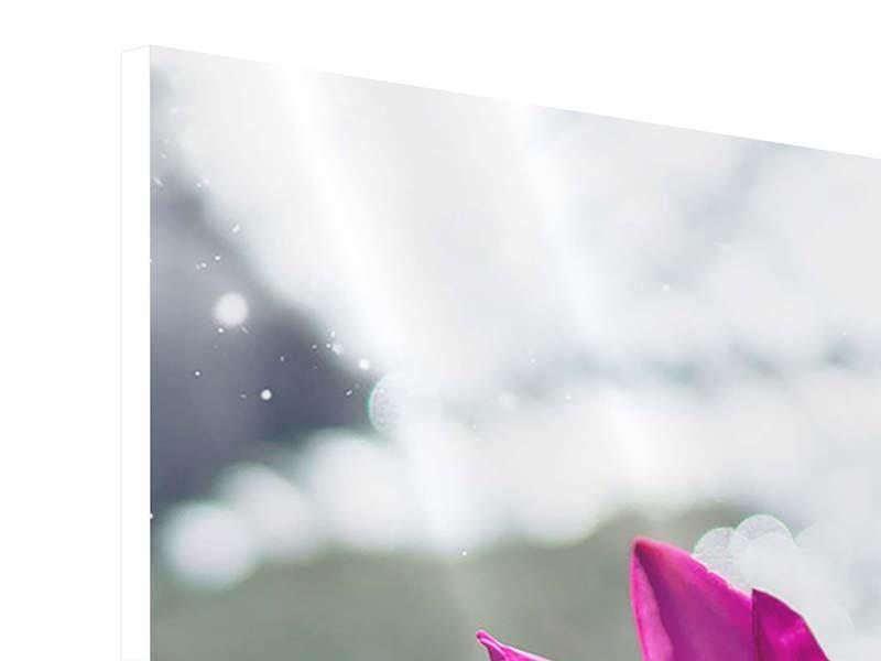 Hartschaumbild 5-teilig Seerosenduo in Pink