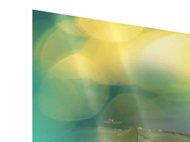 Hartschaumbild 5-teilig Lotus-Spiegelung