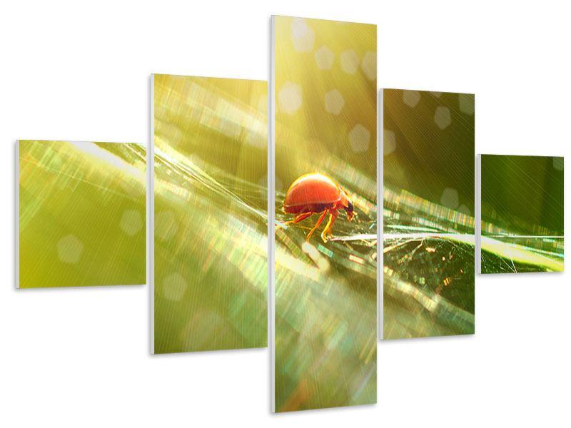 Hartschaumbild 5-teilig Marienkäfer im Sonnenlicht