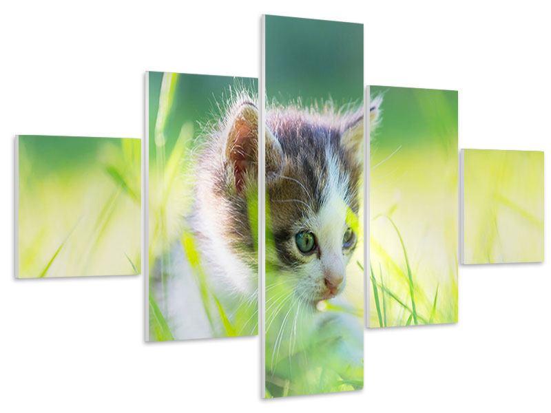 Hartschaumbild 5-teilig Kitten