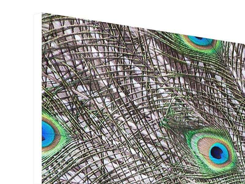 Hartschaumbild 5-teilig Blauer Pfau