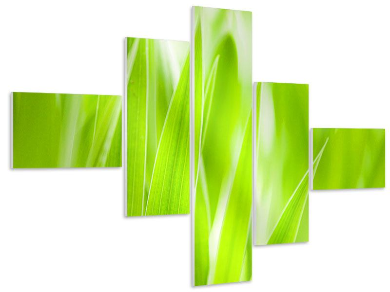 Hartschaumbild 5-teilig modern Gras XXL