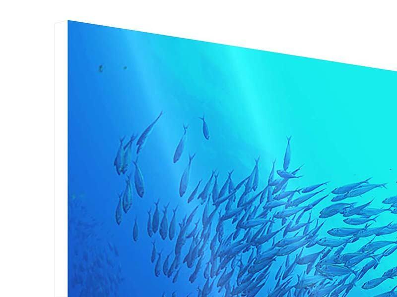 Hartschaumbild 5-teilig modern Fischwelt