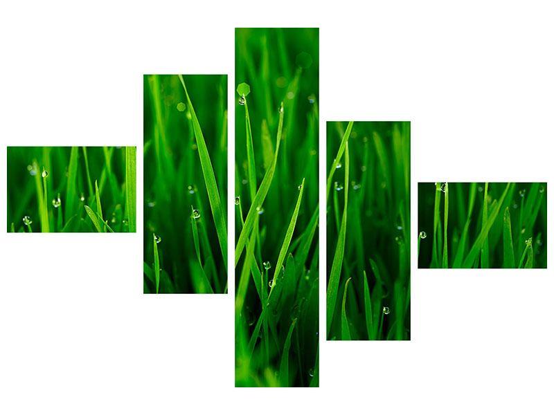 Hartschaumbild 5-teilig modern Gras mit Morgentau