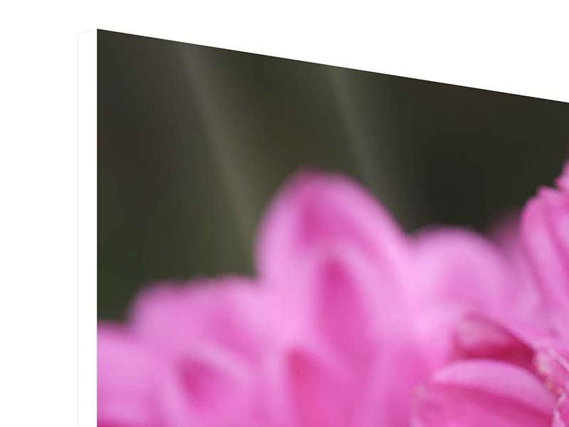 Hartschaumbild 5-teilig modern Chrysanthemen