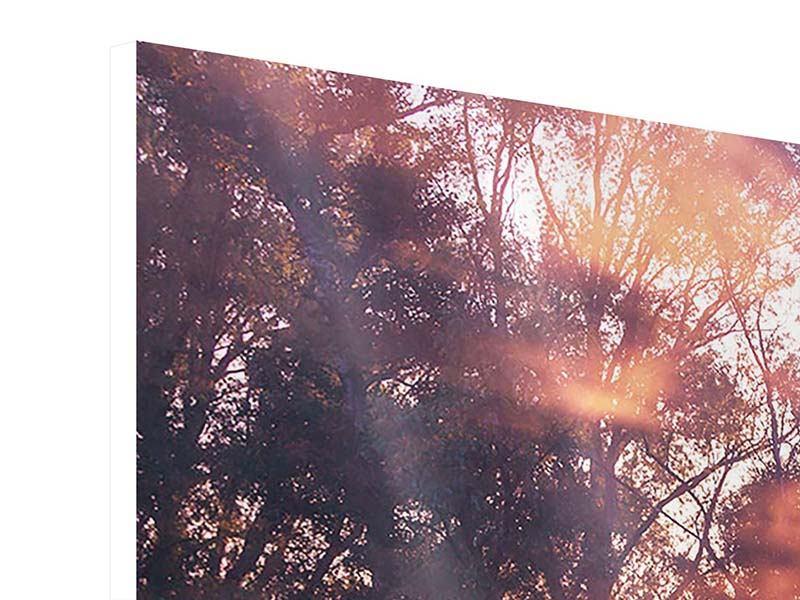 Hartschaumbild 5-teilig modern Die Waldspiegelung