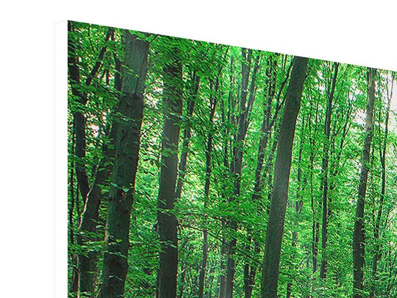 Hartschaumbild 5-teilig modern Tannenwald