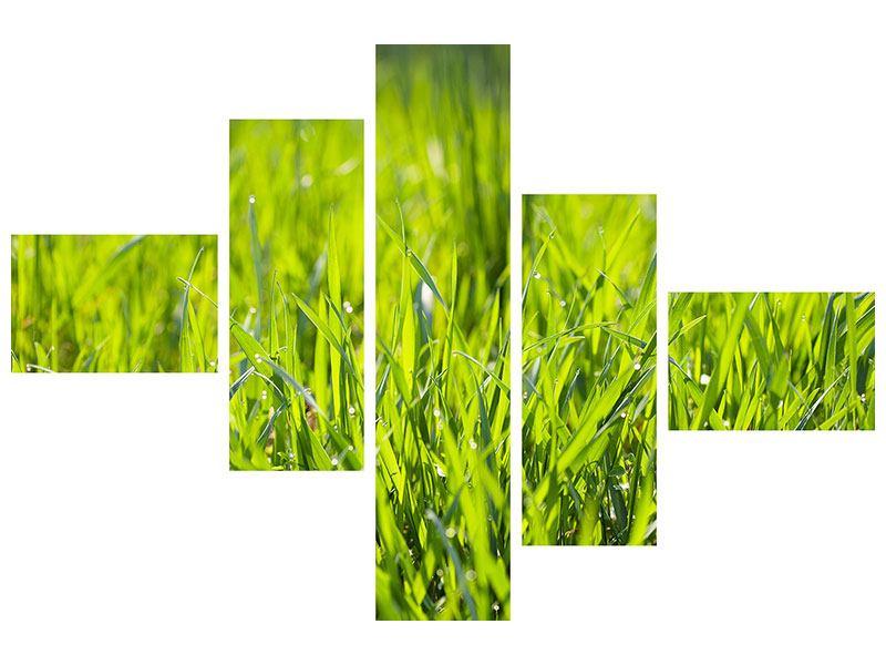 Hartschaumbild 5-teilig modern Gras im Morgentau