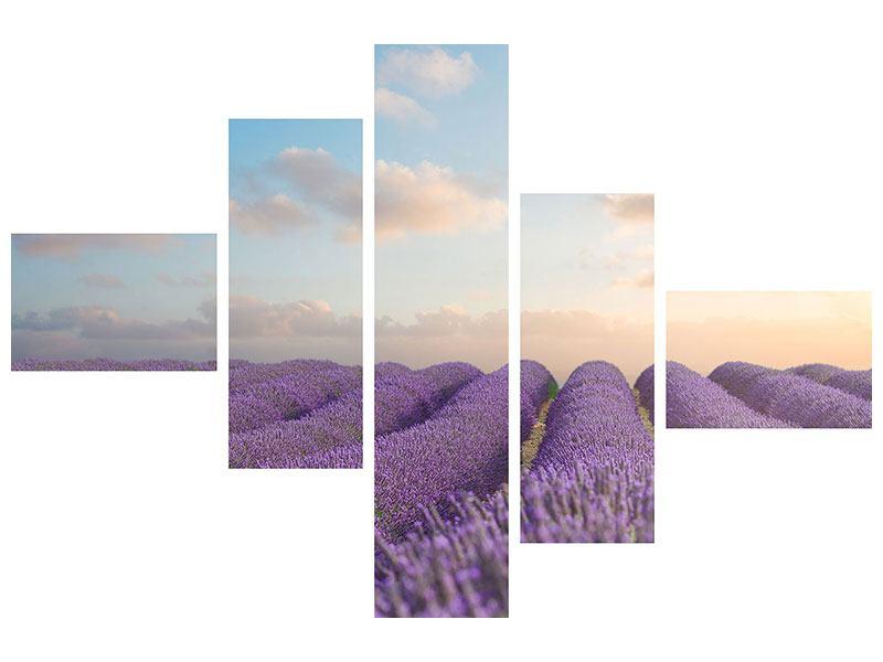 Hartschaumbild 5-teilig modern Das blühende Lavendelfeld