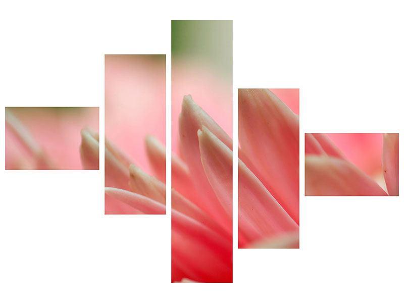 Hartschaumbild 5-teilig modern Close Up einer Blüte