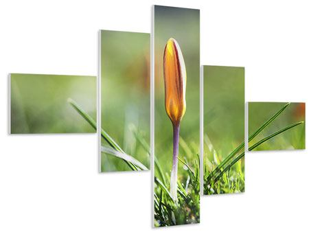 Hartschaumbild 5-teilig modern Die Blütenknospe