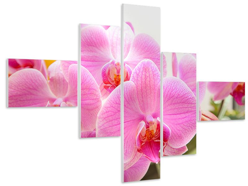 Hartschaumbild 5-teilig modern Königliche Orchideen